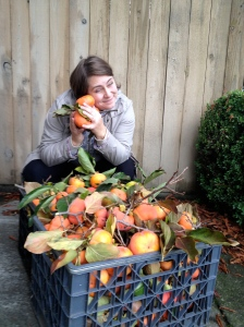 60 lbs of Persimmons!